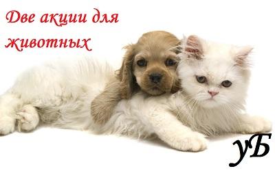 Обзор на акции PROХВОСТ «Придумай имя коту!» и «Pedigree® для щенков!»